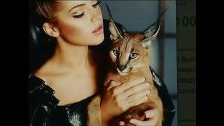На красноярском аукционе продают котят за полмиллиона рублей
