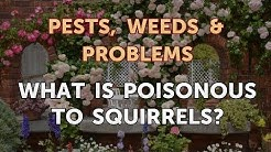 What Is Poisonous to Squirrels?