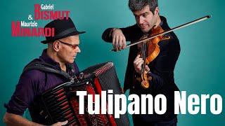 'TULIPANO NERO' by Maurizio Minardi