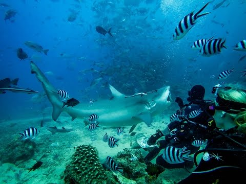 GoPro and Jeb Corliss take on bull sharks in Fiji