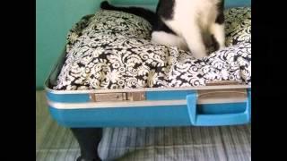 Старый чемоданчик