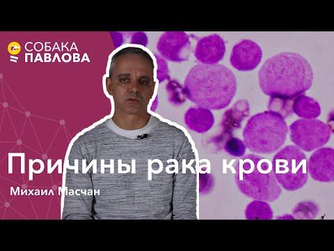 Причины рака крови - Михаил Масчан // мутации, деление и умирание клеток