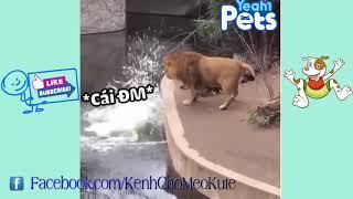 cười không nhặt được mồm - con sư tử ngu vãi haha