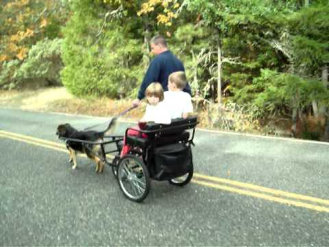 K9 Carting | Exercise your pet and have fun with the entire familyK9