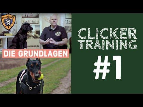 Clickerkonditionierung Hundetraining Gehorsam Hund clickern | klickern | Clickertraining Teil 1