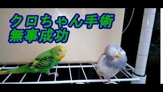 お笑いトリオ、安田大サーカスのクロちゃん(42)が、今月8日に脳動...