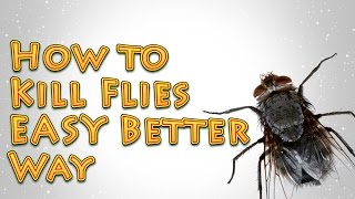 How to Kill Flies A Better EASY way