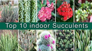 Top 10 indoor succulents | Top 10 Air purifying plants | Tension Free World