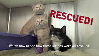 Kittens Rescued from a Drain Pipe