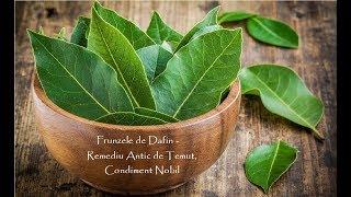 Frunzele de Dafin - Remediu Antic de Temut, Condiment Nobil (Leacuri&Sfaturi Despre Sanatate)