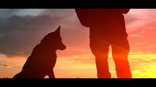 Always Faithful - Documentary Of Military Dogs In Iraq W. Harris Done