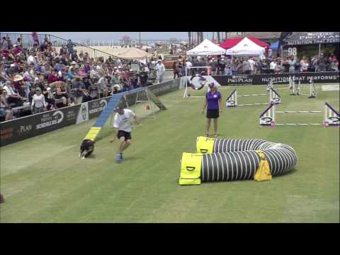Large Dog Agility Competition - 2017 Purina® Pro Plan® Incredible Dog Challenge® Western Regionals