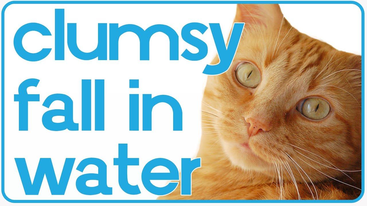 Clumsy Cat Falls Into Fish Tank