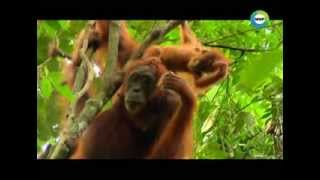 Манящая Суматра