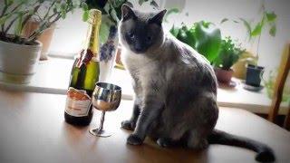 Кошка   свадебная модель!