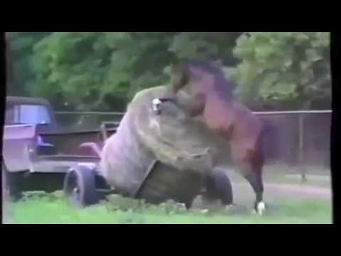 Atın intikamı! En komik at kazaları! www.fungamingpoint.com
