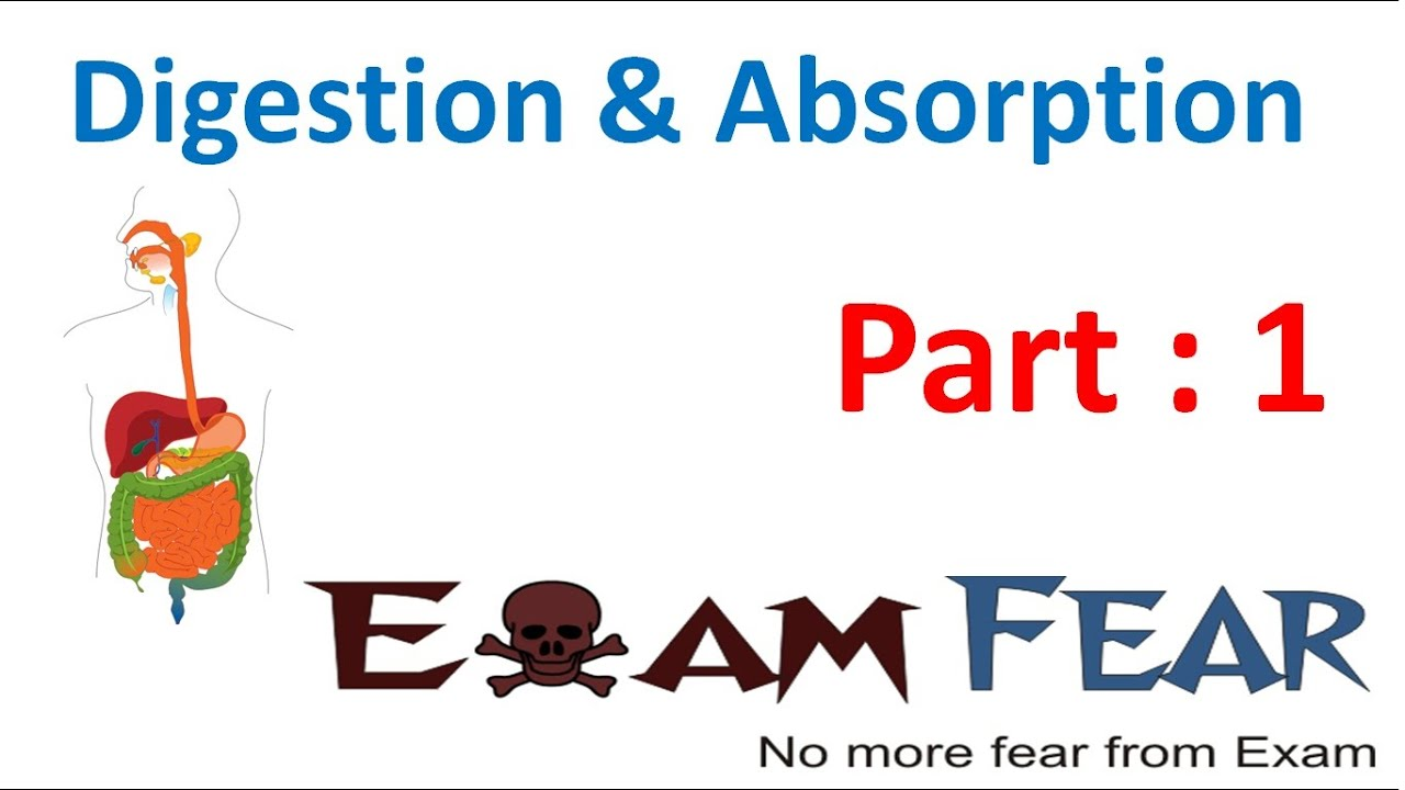 Biology Digestion Absorption Part 1 Introduction Cbse Class 11