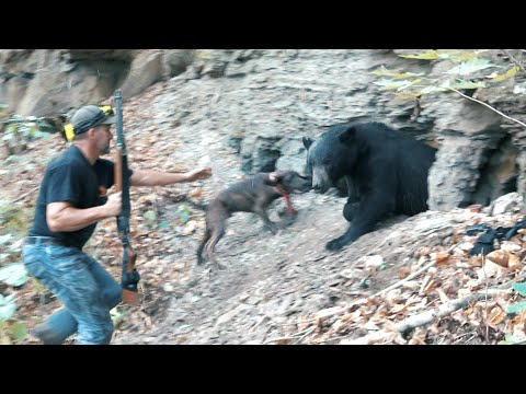 THE BEST BEAR HUNTING VIDEO EVER - Part 2