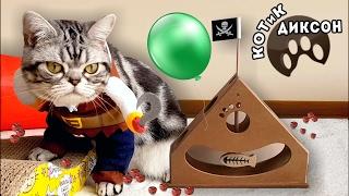 🐾😺 КОТиК ДИКСОН. Новая игрушка-маятник. Смешное видео про кошек