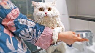 고양이 목욕이 이렇게 쉬운거였나요?🤔