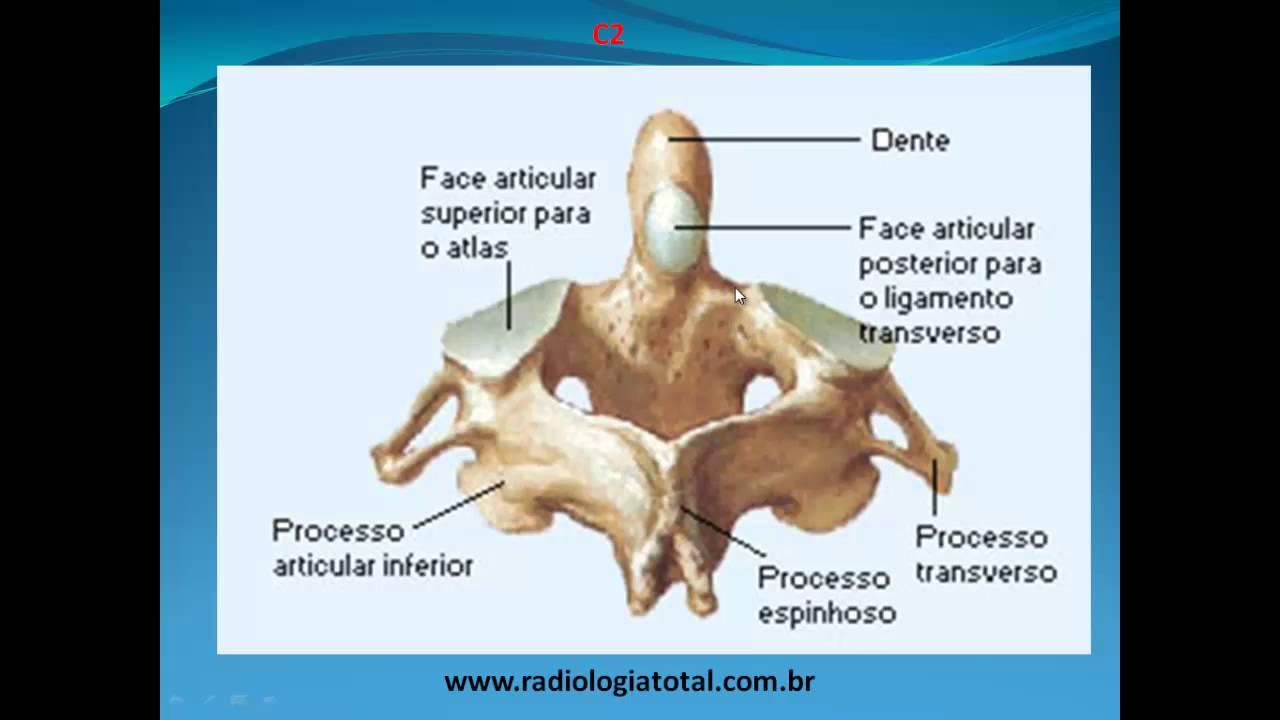 Anatomia Radiológica Coluna Vertebral parte 1 - YouTube