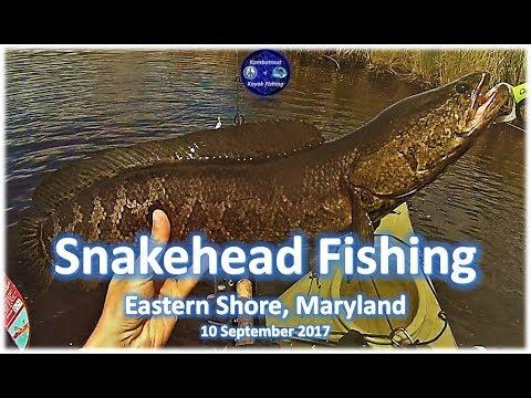 Snakehead Fishing, Eastern Shore, MD 10 September 2017