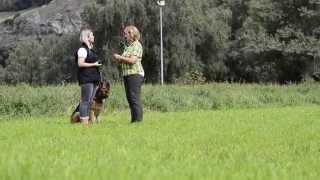 Dog Training - Tracking - German Shepherd - Border Collie - White Shepherd - Yorkie
