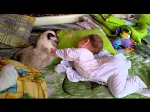 Baby and Siamese cat