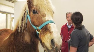 Pony with Rare Cancer Doing Better After Receiving Human Treatment