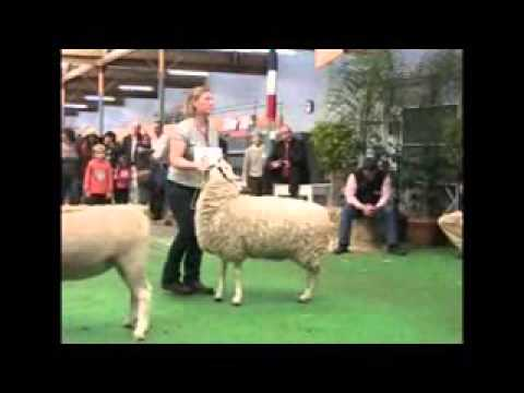 Interbreed Judging 2012 Royal Adelaide Show - Stock Journal Report