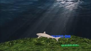 Акулы на Байкале. Готовые проекты CINEMA 4D.