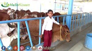 70 रुपए लीटर गिर गाय का दूध , डेयरी फार्मर से बातचीत || Desi Gir Cow Dairy Farm || Gir Cow Bloodline