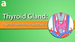 Thyroid Gland: Thyroid Hormone Synthesis