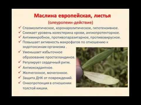 Народная медицина и доступные народные рецепты
