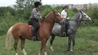 Хорошее отношение к лошадям.mpg