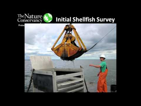 The Nature Conservancy's Shellfish Restoration Efforts in Great South Bay