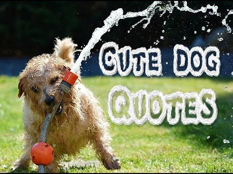Cute Dog Quotes Youtube