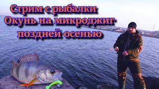 Стрим с рыбалки Окунь на микроджиг поздней осенью