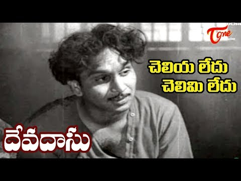 Telugu Old Songs| Devadasu Movie | Cheliya Ledhu Song | ANR | Savitri - OldSongsTelugu