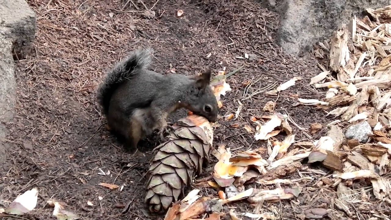 Free Pictures Of Squirrel Food