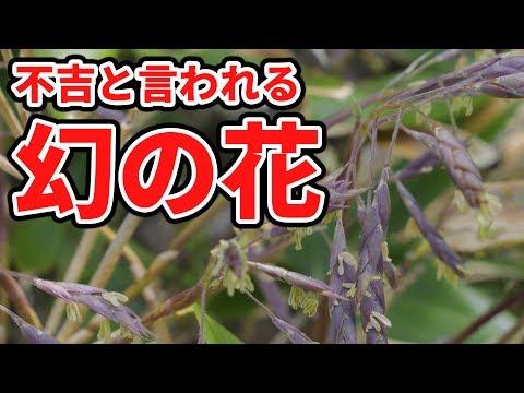【都市伝説】見たら不吉!? 幻の花を秘境で発見した。。 北海道の旅 Vol.5【いちなる】