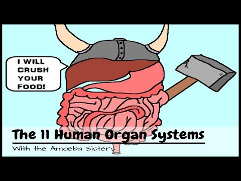 (OLD VIDEO) Human Body Systems: The 11 Champions