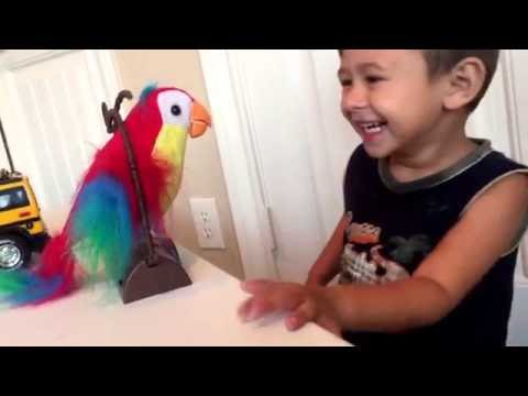 Talking Parrot Toy!