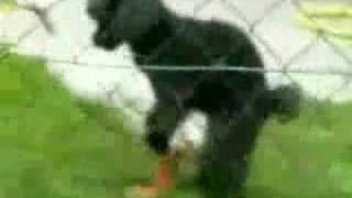 Repeat youtube video หมาเย็ดเป็ด