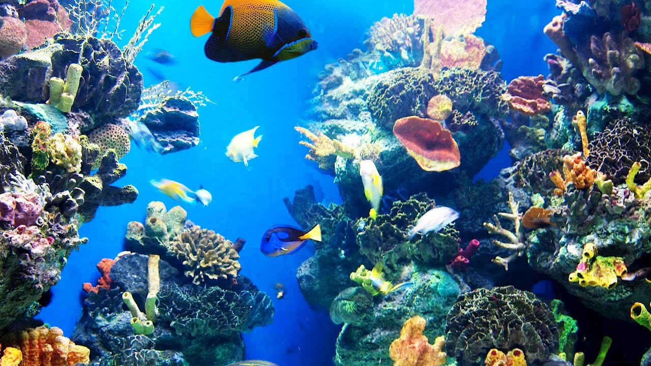 Picking fish for your aquarium - How To Pick Fish For A Fish Tank Aquarium Care