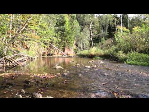 Europe, Latvia, Gauja National park, river stream videoscape, 27th of September 2015. He.