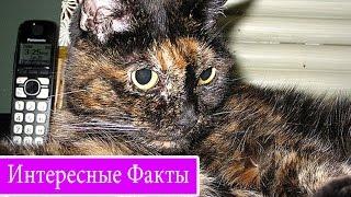 Умер самый старый кот в мире, которому было 30 лет - интересные факты