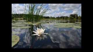 Claude Debussy -  Reflets dans l