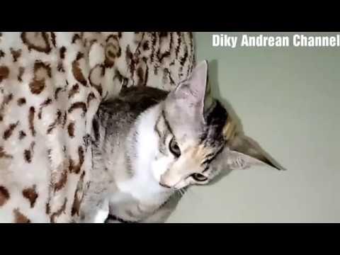 10 ARTI & SIFAT KEPRIBADIAN DARI POSISI TIDUR KALIAN!!! from YouTube · Duration:  6 minutes 7 seconds