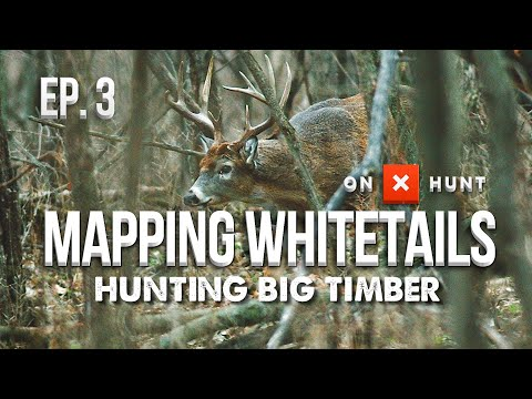 HOW TO HUNT BIG WOODS BUCKS! - Mapping Whitetails